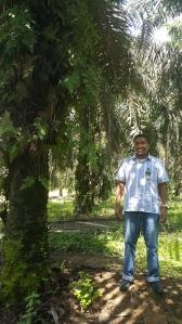 Kebun Sawit